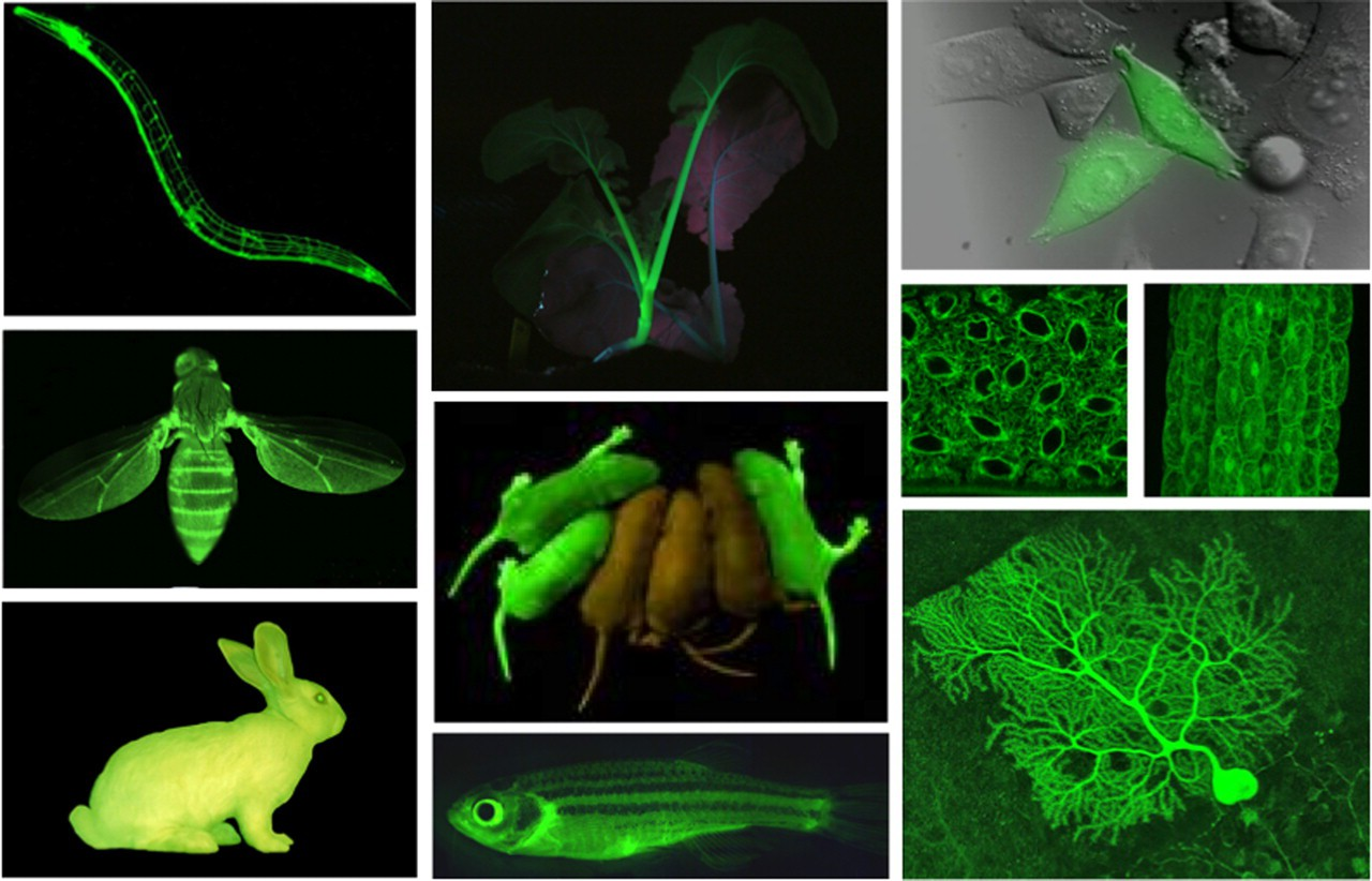GFP-IMages.jpg